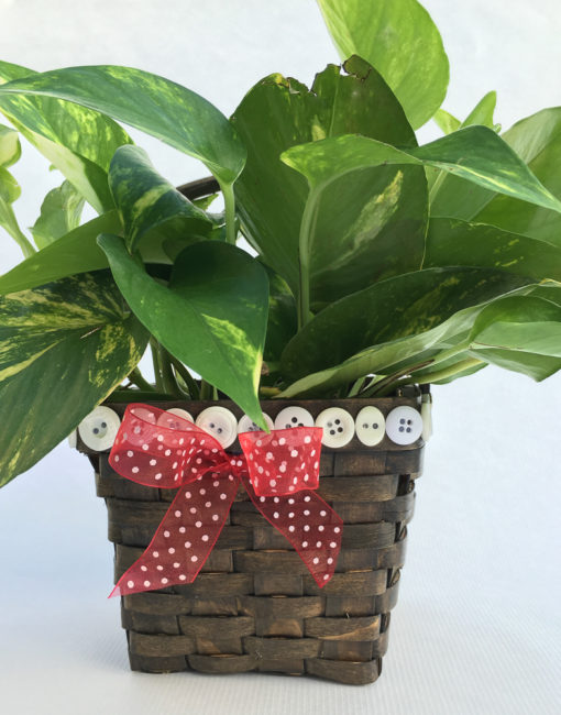 Teacher Gift Basket with Plant